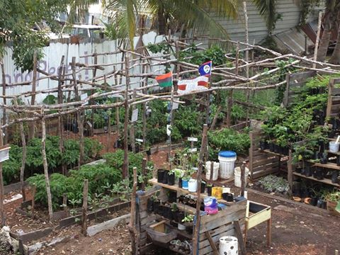 Belize garden 2